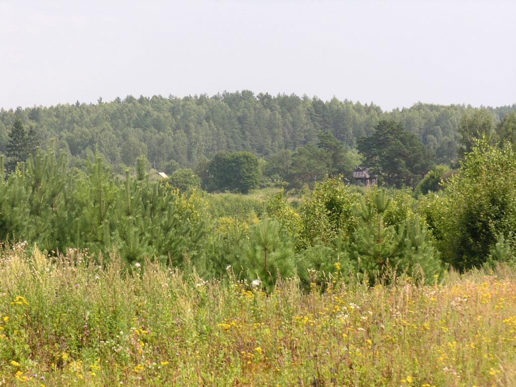 Виды деревни борисенки